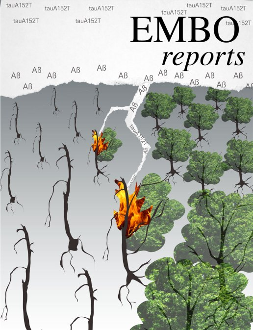 Gladstone_EMBOcover_neuron_forest